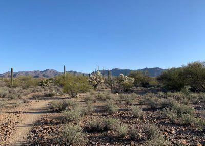 Tucson, Arizona Desert hiking