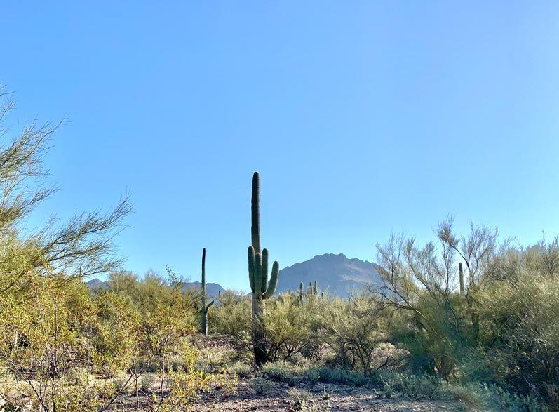 RV Park near Saguaro National Park