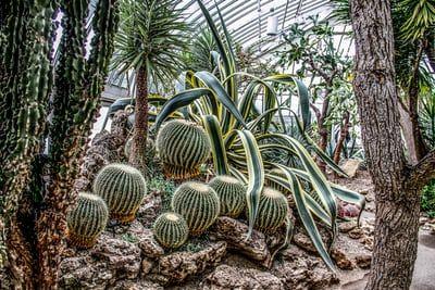 Tucson Botanical Garden